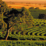 Riches on our doorstep – the Barossa Valley