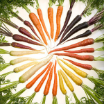 Seasonal secrets and heirloom carrots