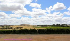 View from Jeir Creek Wines