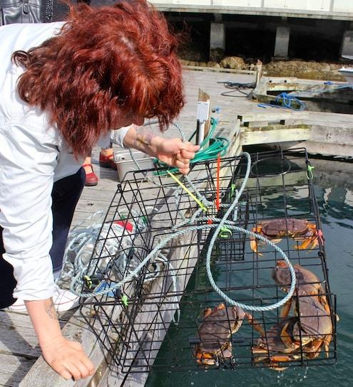 Crabs, Victoria, Vancouver Island