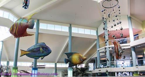 Olympic fish at Daydream Island