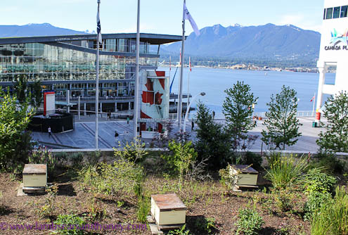 View from the bee hives, Fairmont Waterfront, Vancouver BC