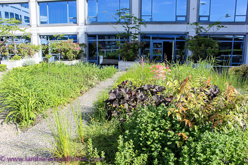 Rooftop garden, Fairmont Waterfront, Vancouver BC