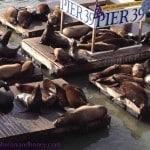Wish You Were Here – Pier 39 San Francisco