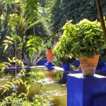 Majorelle Garden, Marrakech – A Rhapsody in Blue
