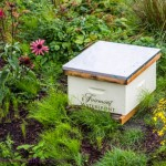 Back to the Bees – the Fairmont Waterfront Bees