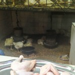 Wish You Were Here Postcards – Poultry Shopping in the Fes Medina