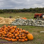 Wish You Were here Postcards – Thanksgiving Pumpkin Harvest
