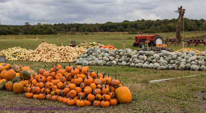 Thanksgiving & pumpkintime