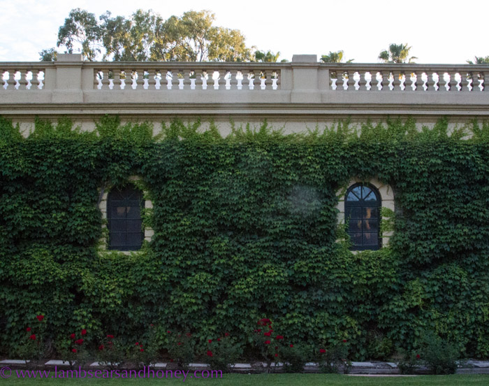 The ivy-clad facade of the old buildings at Seppeltsfield.