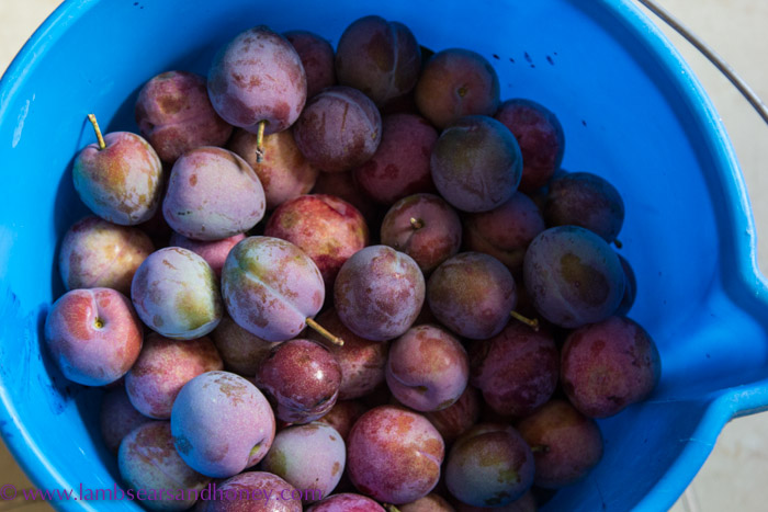 In My Kitchen February 2015 - plums.