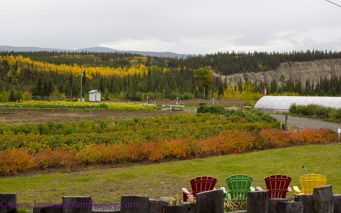 Breathtaking view across to the Takhini River from Rivendell Farm - Yukon food production
