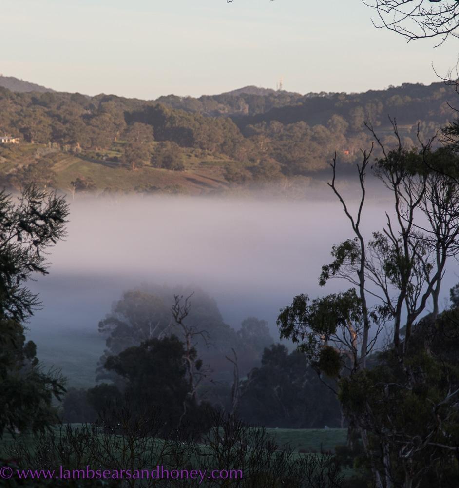 Adelaide Hills, misty morning