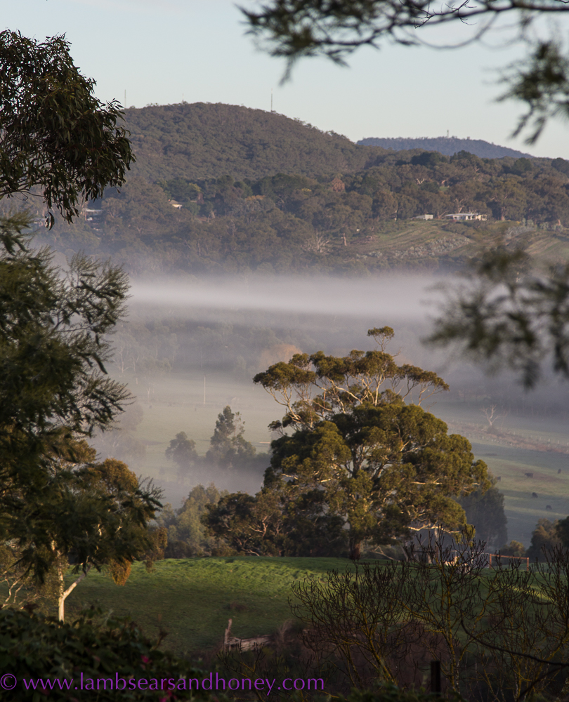Adelaide Hills view