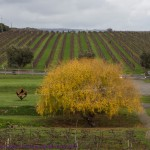 Maxwell Wines in South Australia's McLaren Vale