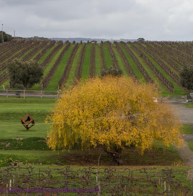 Maxwell Wines, McLaren Vale