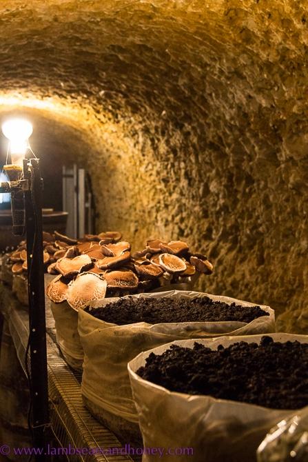 Mushroom limestone cave, Maxwell Wines