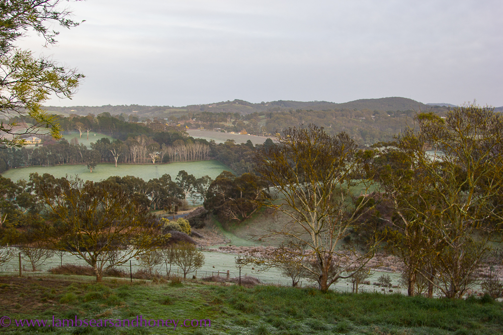 Adelaide Hills, frosty morning