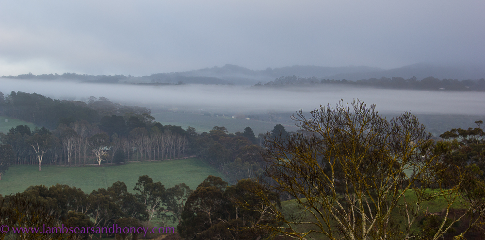 Smoke hanging in valley, Adelaide Hills