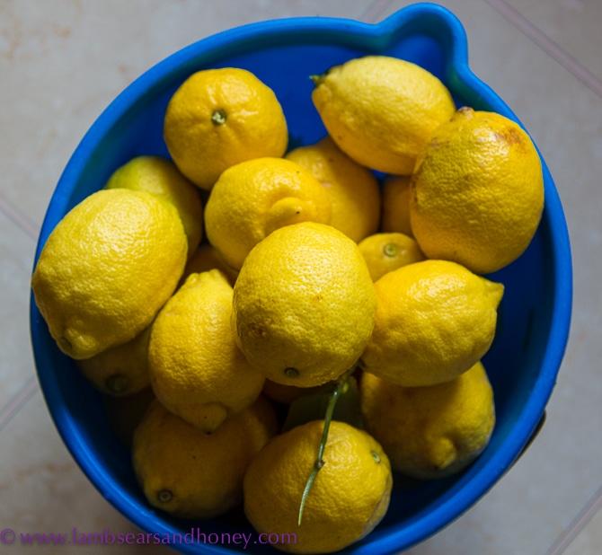 Loads of lemon In My Kitchen August 2015