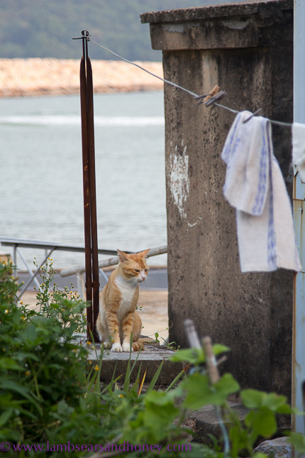 Plenty of cats in Tai O - Tai O Heritage Hotel