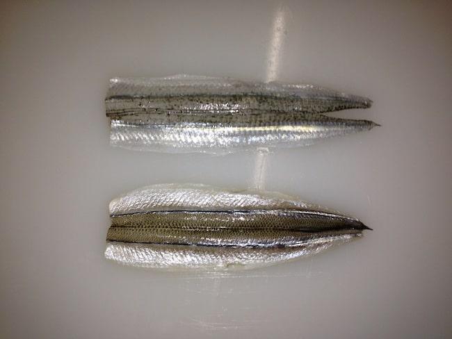 Australian garfish