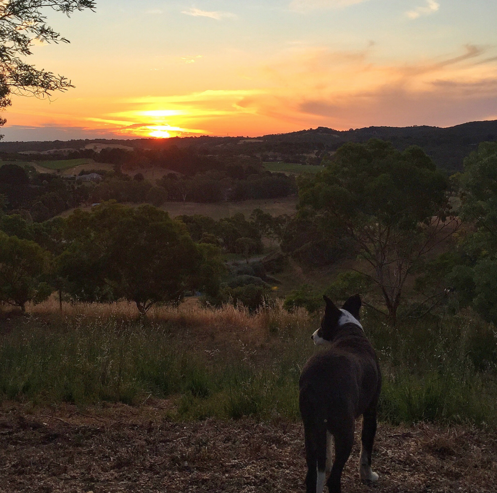 Sunset in Balhannah in the Adelaide Hills, news to me