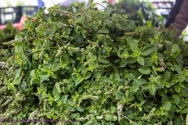 Porta Palazzo market, fragrant herbs