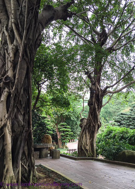gnarled trees, nan lian garden