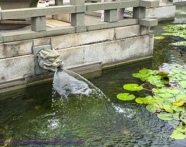 Lotus pond, nan lian garden