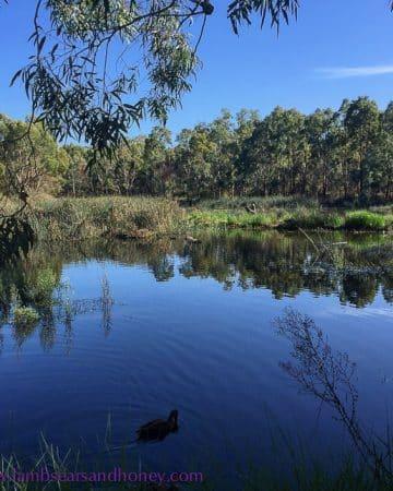 Laratinga Wetlands were news to me