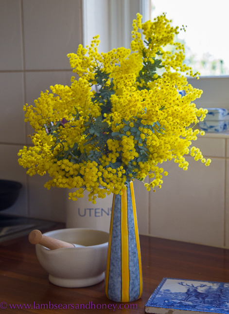 golden wattle and the promise of spring in my kitchen