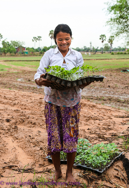 Fresh, organic herbs - cambodian food production