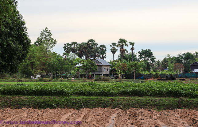Farm - Cambodian food production