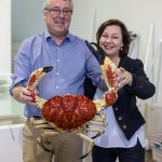 Premium Seafood from Ferguson Australia – Family Owned & Run