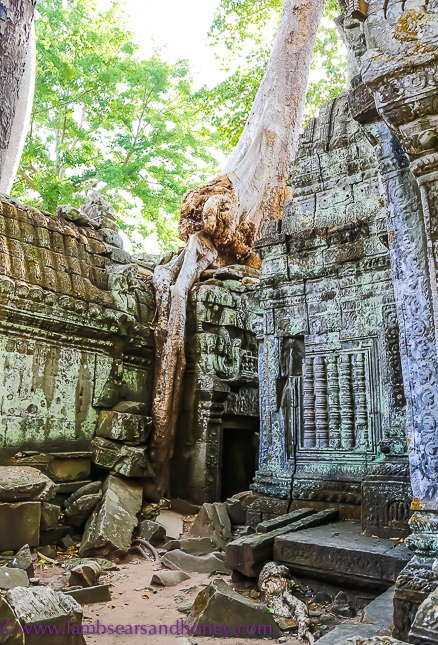 angkor wat nature