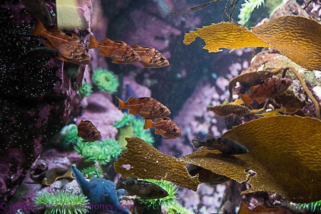 vancouver aquarium fish