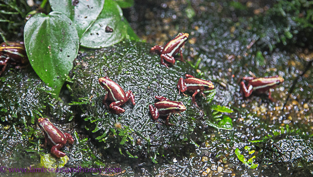 vancouver aquarium - tiny frogs