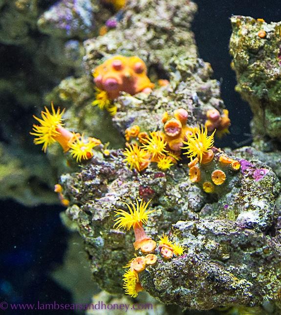 vancouver aquarium, bright anemones