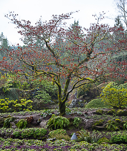 butchar gardens on vancouver island, winter treescape