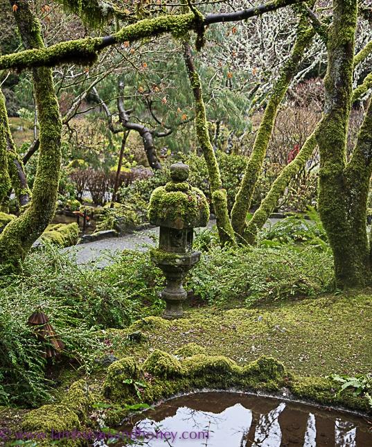 butchart gardens on vancouver island, Japanese glen