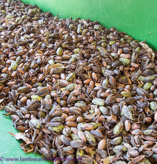 pecans, singing magpie produce