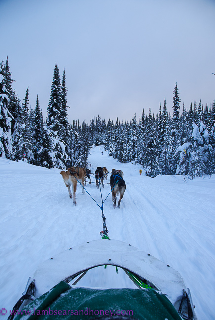 Mountain Man Adventures dog sledding