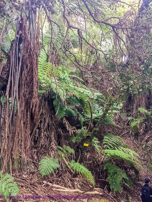 Magical forest - Wilsons Abel Tasman