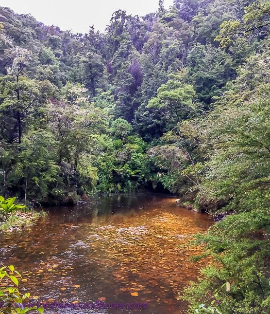 Pond at Wilsons Abel Tasman
