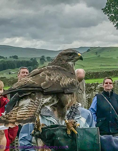 bolton castle falcon