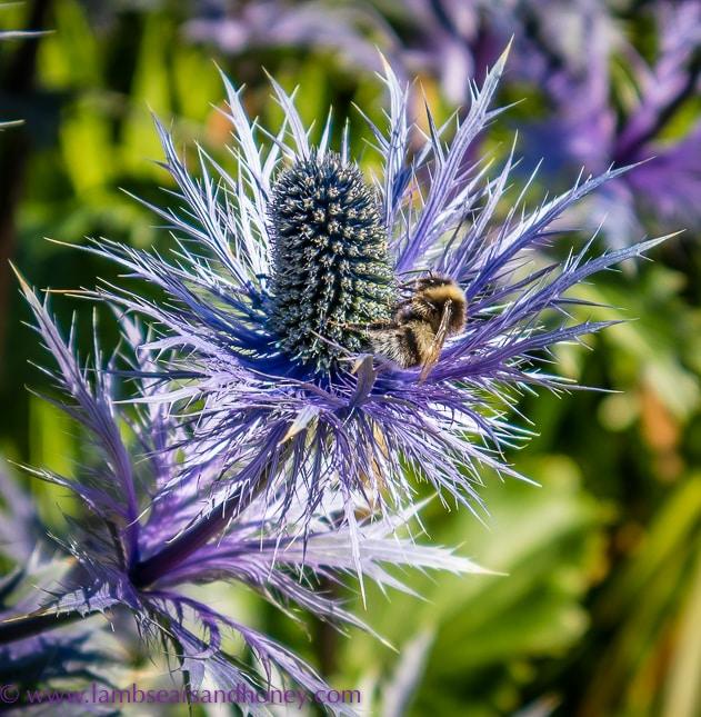 a bumble bee discover scotland