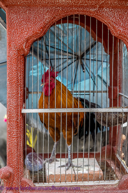 bali alarm clock - rooster