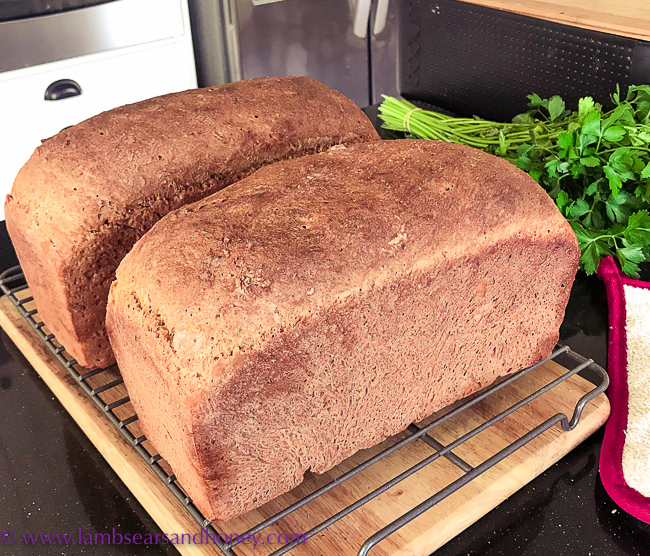 two loaves of molasses bread