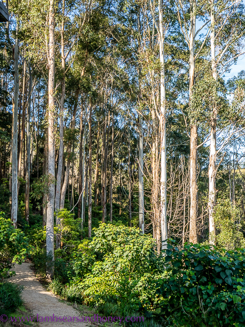 A path through the forest at Cape Byron Distillery,